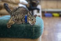 Волонтеры спасли кошек из адской квартиры, Фото: 68