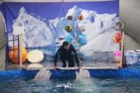 Дельфинарий в Туле, Фото: 7
