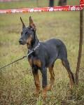 Международная выставка собак, Барсучок. 5.09.2015, Фото: 46