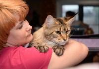 Выставка кошек в Искре, Фото: 28