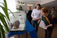 Выставка кошек в ГКЗ. 26 марта 2016 года, Фото: 8