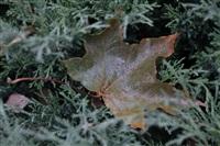 Осень, Фото: 46