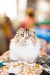 """Выставка """"Пряничные кошки"""". 15-16 августа 2015 года., Фото: 79"""