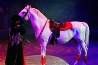 Цирк «Вива, Зорро!» в Туле , Фото: 79