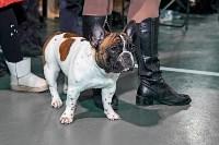 Выставка собак в Туле 26.01, Фото: 26