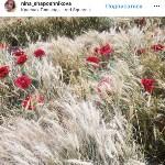 Цветочный джем: Тульское поле в Москве, Фото: 22