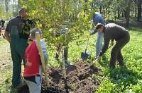 В Пролетарском районе высадили молодые деревья, Фото: 9