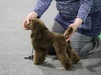 Выставка собак в Туле 14.04.19, Фото: 20