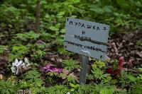 Кладбище домашних животных в Туле, Фото: 55
