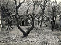 Цирк деревьев, Фото: 2