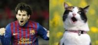 Этот кот умеет кричать победный клич так же, как легендарный игрок сборной Аргентины — Лионель Месси., Фото: 8