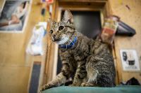 Волонтеры спасли кошек из адской квартиры, Фото: 84