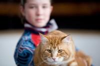 Выставка кошек. 4 и 5 апреля 2015 года в ГКЗ., Фото: 144
