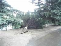 Ураган в Плавске, Фото: 1