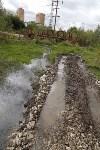 Мост в березовой роще., Фото: 6