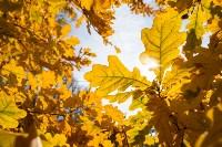 Золотая осень в Туле-2019, Фото: 77