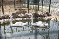 Зоопарк на набережной Упы в Туле, Фото: 4