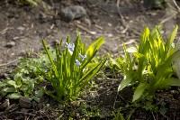 Весна 2020 в Туле: трели птиц и первые цветы, Фото: 32