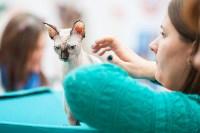 Выставка кошек в МАКСИ, Фото: 79