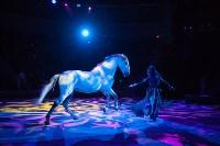 Туляков приглашают на новогоднее представление «Ёлка в цирке», Фото: 78