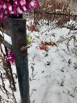 Кто устроил беспредел на кладбище Горняк, Фото: 15