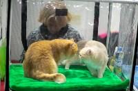 Пряничные кошки, Фото: 27