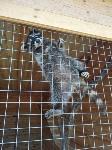 Куда свозить детей посмотреть на животных в 100 км от Тулы: обзор, Фото: 5