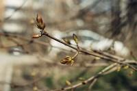 Весна 2020 в Туле: трели птиц и первые цветы, Фото: 18