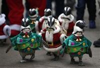 Рождественские пингвины, Фото: 7