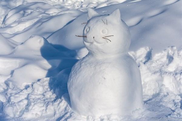 Саратовский котовик - снежный Барсик. Фото Ксении Черновой.