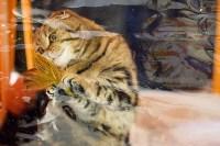 Выставка кошек. 4 и 5 апреля 2015 года в ГКЗ., Фото: 60