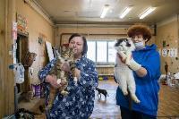 Волонтеры спасли кошек из адской квартиры, Фото: 54