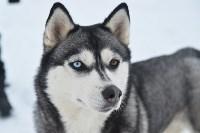 Праздник северных собак на Куликовом поле , Фото: 25