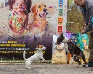 Международная выставка собак, Барсучок. 5.09.2015, Фото: 76
