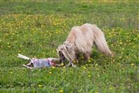В Туле состоялись собачьи бега, Фото: 17