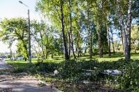 В Баташевском саду из-за непогоды упали вековые деревья, Фото: 15
