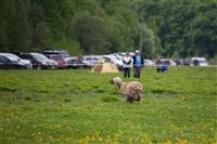 В Туле состоялись собачьи бега, Фото: 14