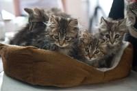 Выставка кошек в ГКЗ. 26 марта 2016 года, Фото: 4