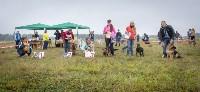 Международная выставка собак, Барсучок. 5.09.2015, Фото: 31