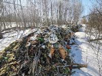 Под Тулой неизвестные сбросили в лесополосе несколько тонн гнилых овощей, Фото: 1