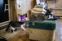 Волонтеры спасли кошек из адской квартиры, Фото: 69