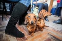 Выставка собак в Туле, 29.11.2015, Фото: 58