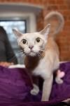 Выставка кошек в Искре, Фото: 12