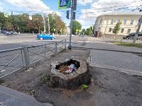 В Туле гибнут деревья, Фото: 23
