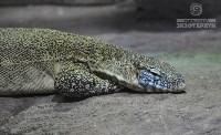 Ящерицы в Тульском экзотариуме, Фото: 2