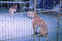 В Тульском цирке родился тигролев, Фото: 14
