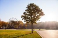 Центральный парк, утро, осень, Фото: 36