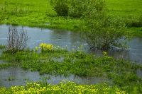 Дедилово затопило, Фото: 10