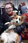 Выставка собак в Туле 26.01, Фото: 3
