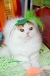 """Выставка """"Пряничные кошки"""" в ТРЦ """"Макси"""", Фото: 20"""